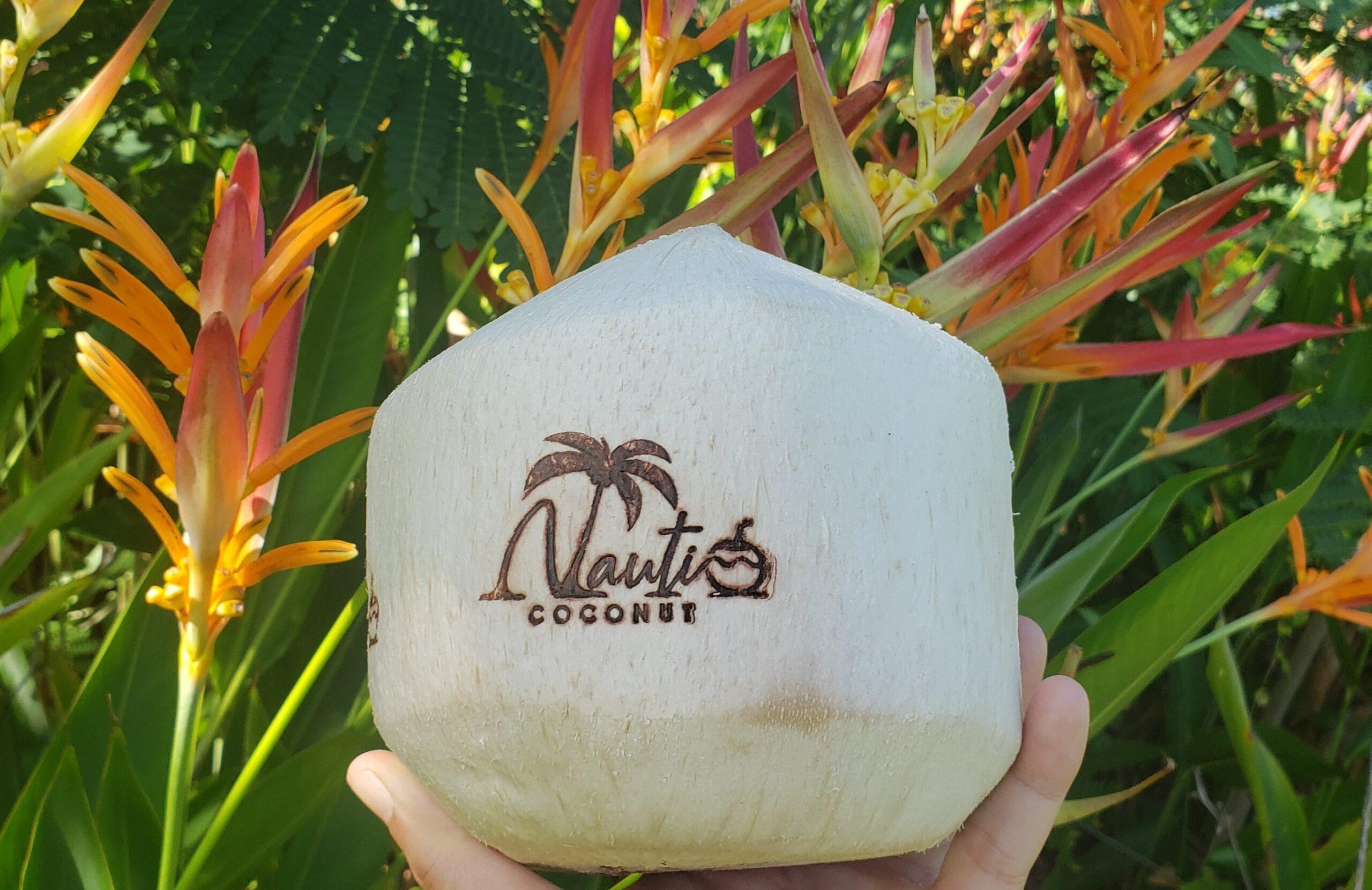 nauti coconut and birds of paradise